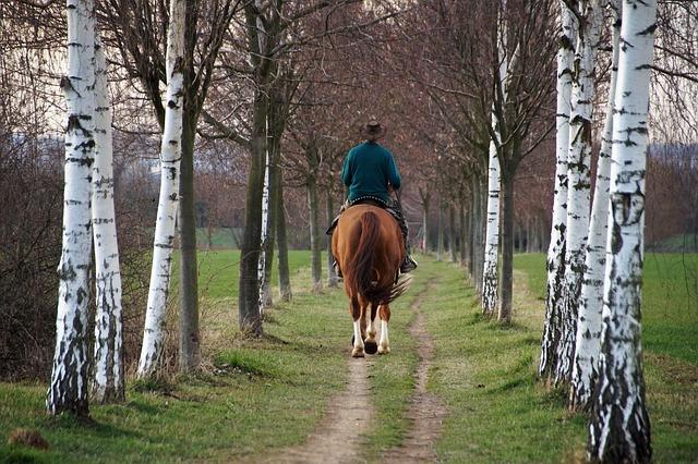 Cavalier sur un cheval en forêt